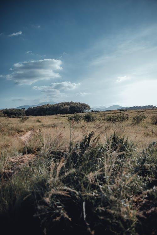 Foto stok gratis kertas dinding, paisagem