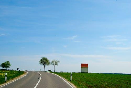 Photos gratuites de arbres, chemin, ciel, croissance