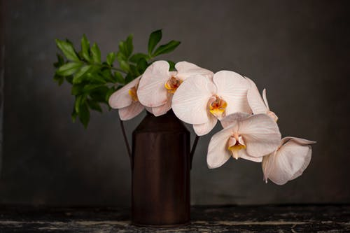 Free stock photo of flower, orchid