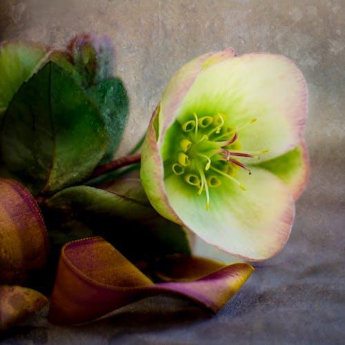 Free stock photo of beautiful flower, rustic