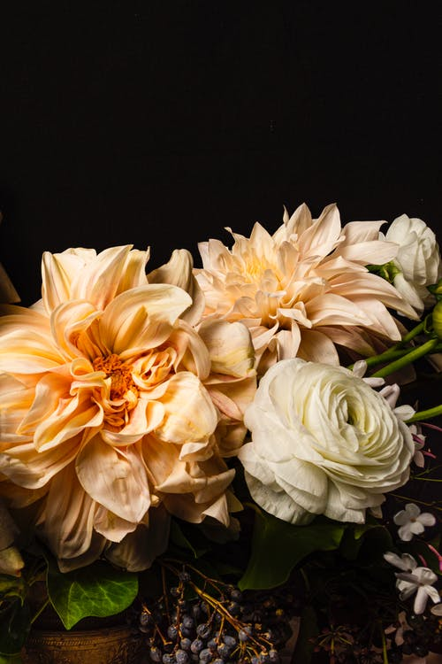 Free stock photo of beautiful flower, dahlia, floral arrangement