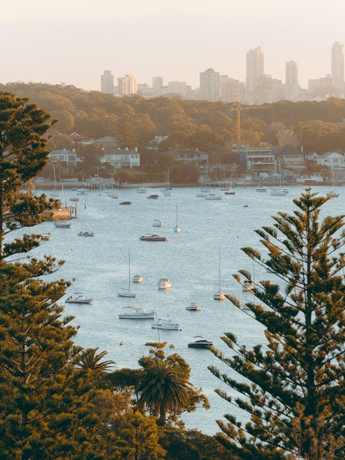 Foto profissional grátis de água, árvores, barcos, barcos a vela