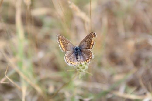 Ilmainen kuvapankkikuva tunnisteilla hyönteinen, luonto, perhonen