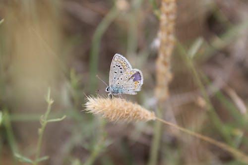 Ilmainen kuvapankkikuva tunnisteilla hyönteinen, kaunis, luonto, perhonen