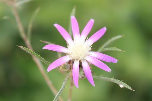 Ilmainen kuvapankkikuva tunnisteilla kaunis, kukka, lila, luonto