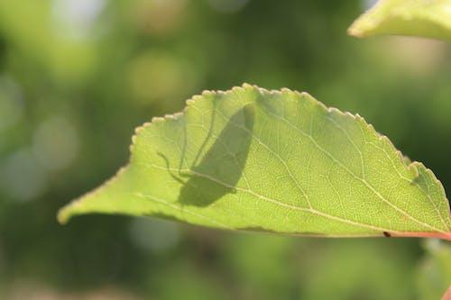 Ilmainen kuvapankkikuva tunnisteilla hyönteisten varjo, lief, luonnon kauneus, luonto