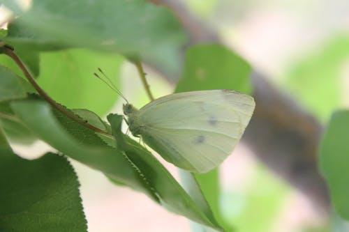 Ilmainen kuvapankkikuva tunnisteilla camoflage, hyönteinen, luonnon kauneus, perhonen