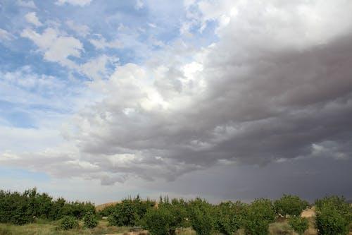 Ilmainen kuvapankkikuva tunnisteilla dramaattinen taivas, luonto, pilvet, puut