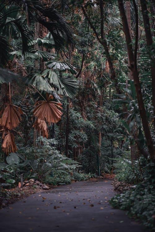 Free stock photo of forest, jungle, jungleroad
