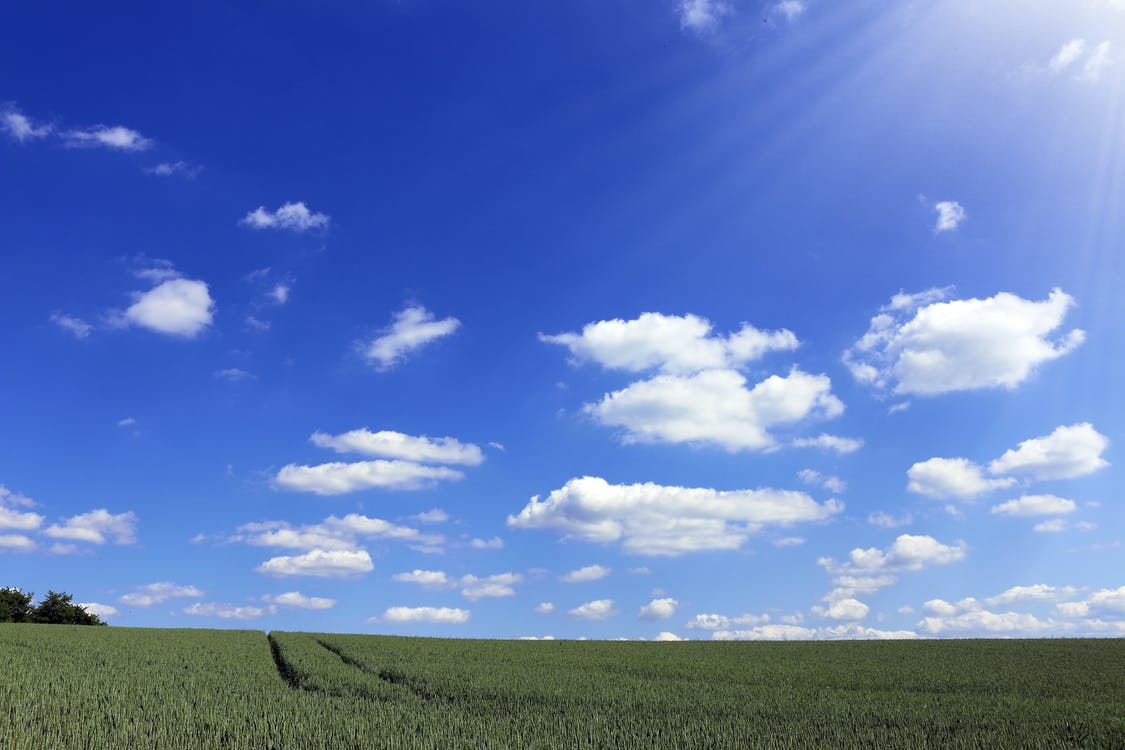 Crop Field Under Sunny Sky