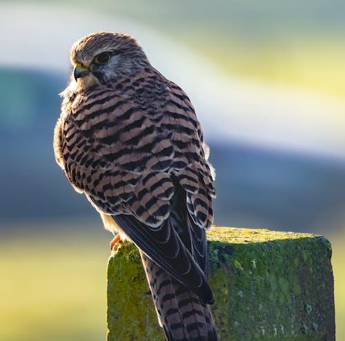 Ảnh lưu trữ miễn phí về chim ưng