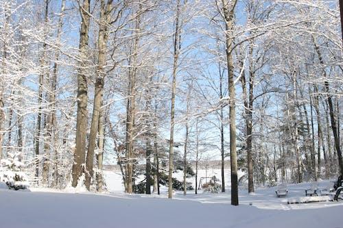 Free stock photo of Fresh Snowfall, Minnesota Winter, Winter Lake through the Trees