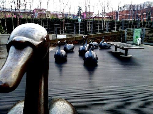 Ilmainen kuvapankkikuva tunnisteilla aamu unionin kanavan edinburghissa, edinburgh, skotlanti