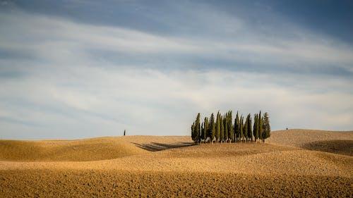 Бесплатное стоковое фото с за городом, зерновые, осень, пахотная земля