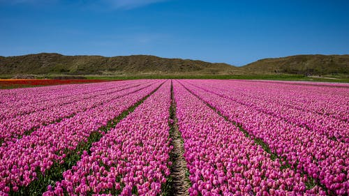꽃, 꽃이 피는, 노를 젓다, 농업의 무료 스톡 사진