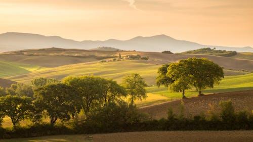 Free stock photo of farmland, rolling hills, sunrise, trees