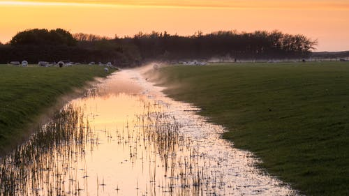 Free stock photo of canal, golden, Holland, mist