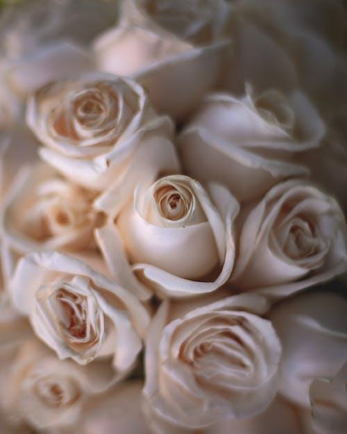 Gratis arkivbilde med blomsterarrangement, blomsterbukett, bukett, hvite blomster