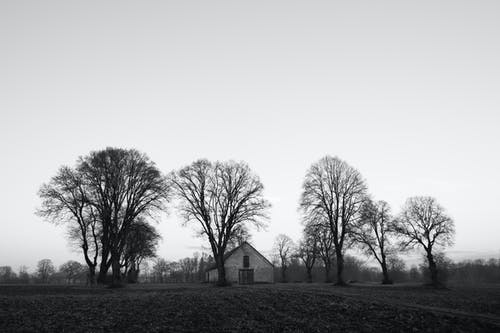 Grayscale Photo of House Near Bare Trees