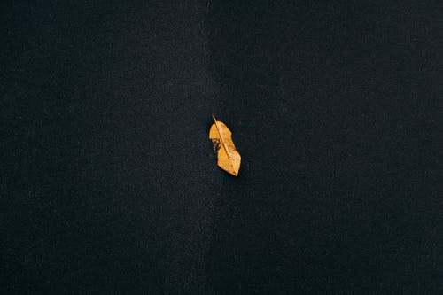 Brown Leaf on Black Surface
