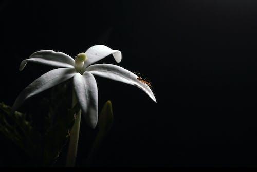 Kostenloses Stock Foto zu schwarz und weiß, schwarze hintergrundbilder