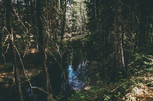 Free stock photo of blue water, forest, light and shadow