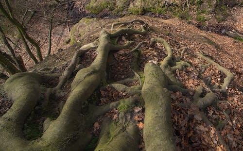 Gratis arkivbilde med natur, røtter, tre