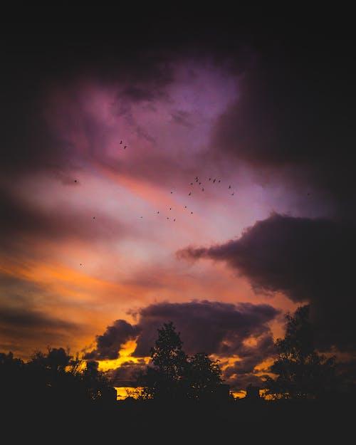 Free stock photo of autumn mood, birds, colors