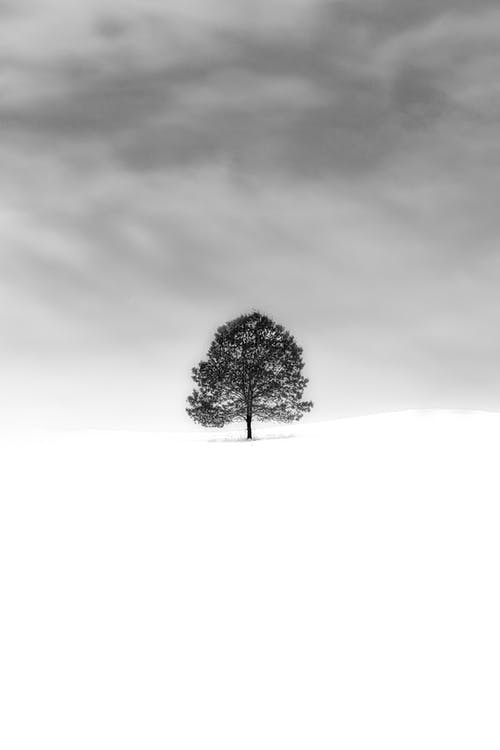 Grayscale Photo of Tree on A Snow Covered Field