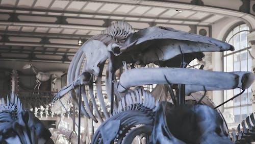 고래, 과학, 동물, 박물관의 무료 스톡 사진