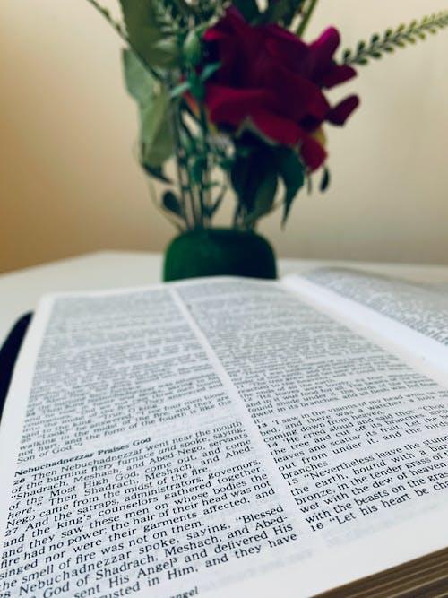Gratis arkivbilde med bibel, fotografi, gud, houseofgod