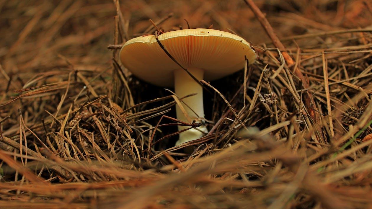 Боровик, гриб, грибы