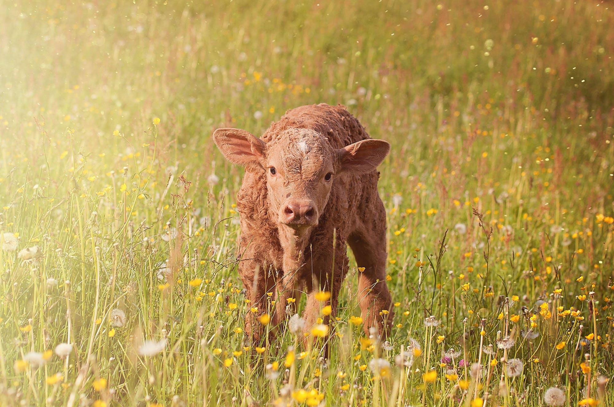Brown Cub on Green Grass Field