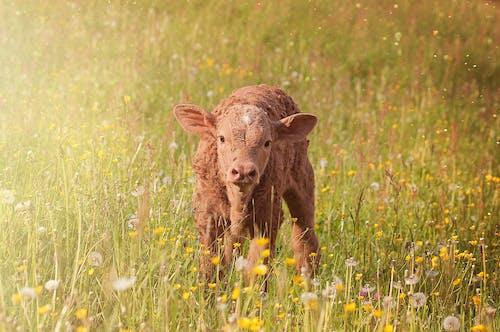 Foto d'estoc gratuïta de animal, camp, flors, herba
