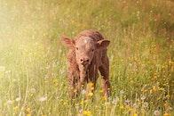 field, flowers, animal