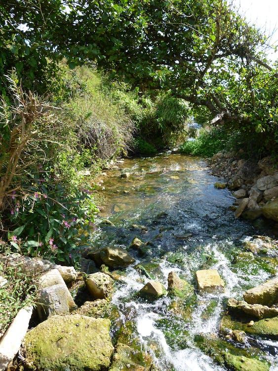 Free stock photo of rocks, stream, sunny