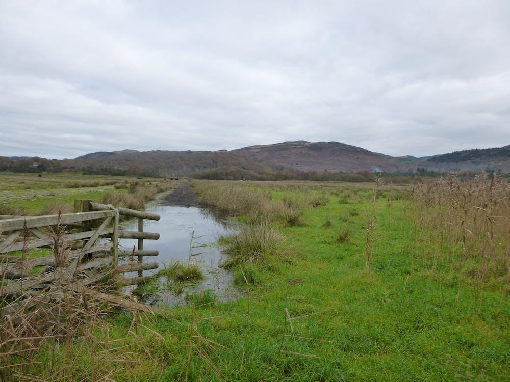 Free stock photo of fence, green, marsh