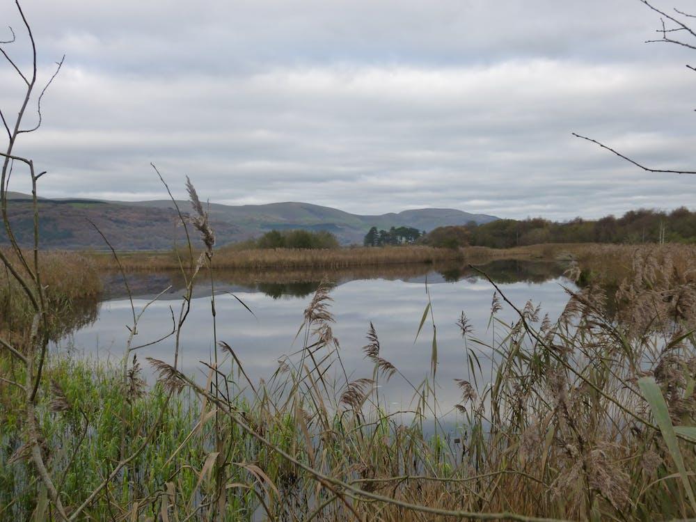 Free stock photo of green, marsh, nature