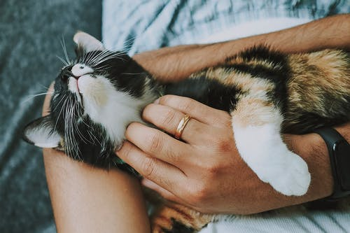 Free stock photo of care, cat, furry, furry animals
