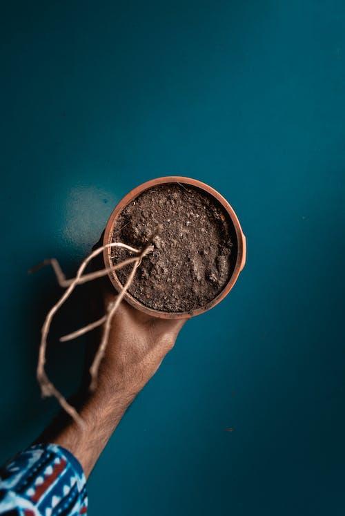 Darmowe zdjęcie z galerii z garnek, gleba, roślina, suszona roślina