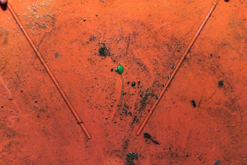 Kostenloses Stock Foto zu allein, blatt, blätter, boden