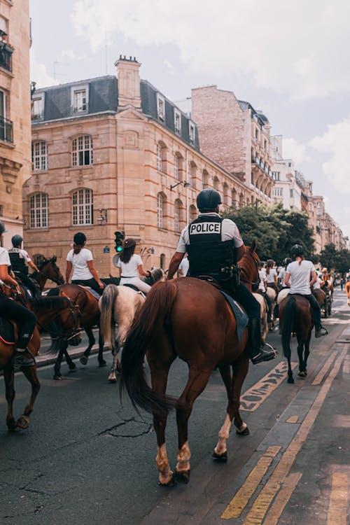 Fotos de stock gratuitas de adulto, caballería, caballos, ceremonia