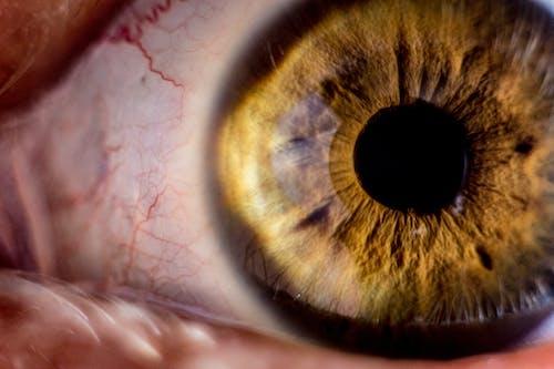 Free stock photo of anatomy, extreme close-up, eye, eyeball