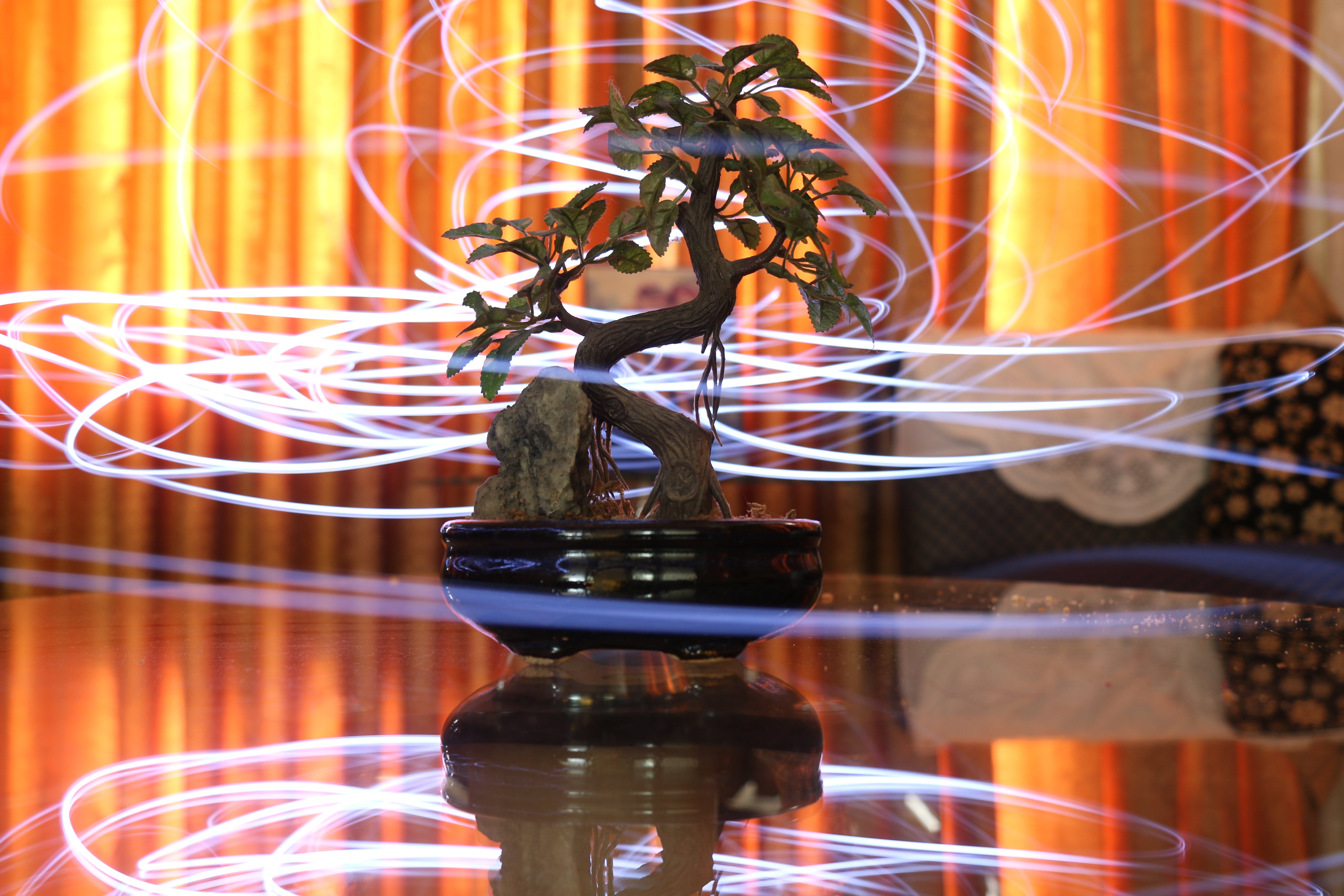 Free stock photo of abstract, bonsai, cool, light painting