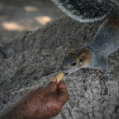 Free stock photo of animal, bokeh, chipmunk, feeding