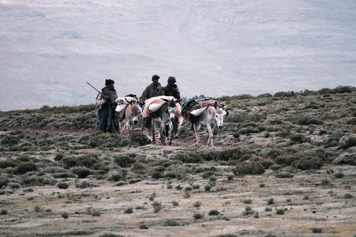 People with bags walking behind donkeys carrying personal items while crossing grass terrain against hill in daytime