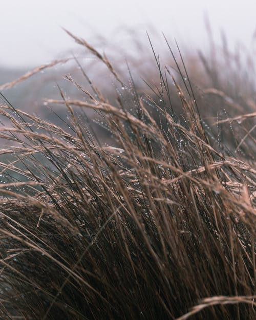 Dry stipa grass with water drops located on field in foggy weather against another plants in daytime