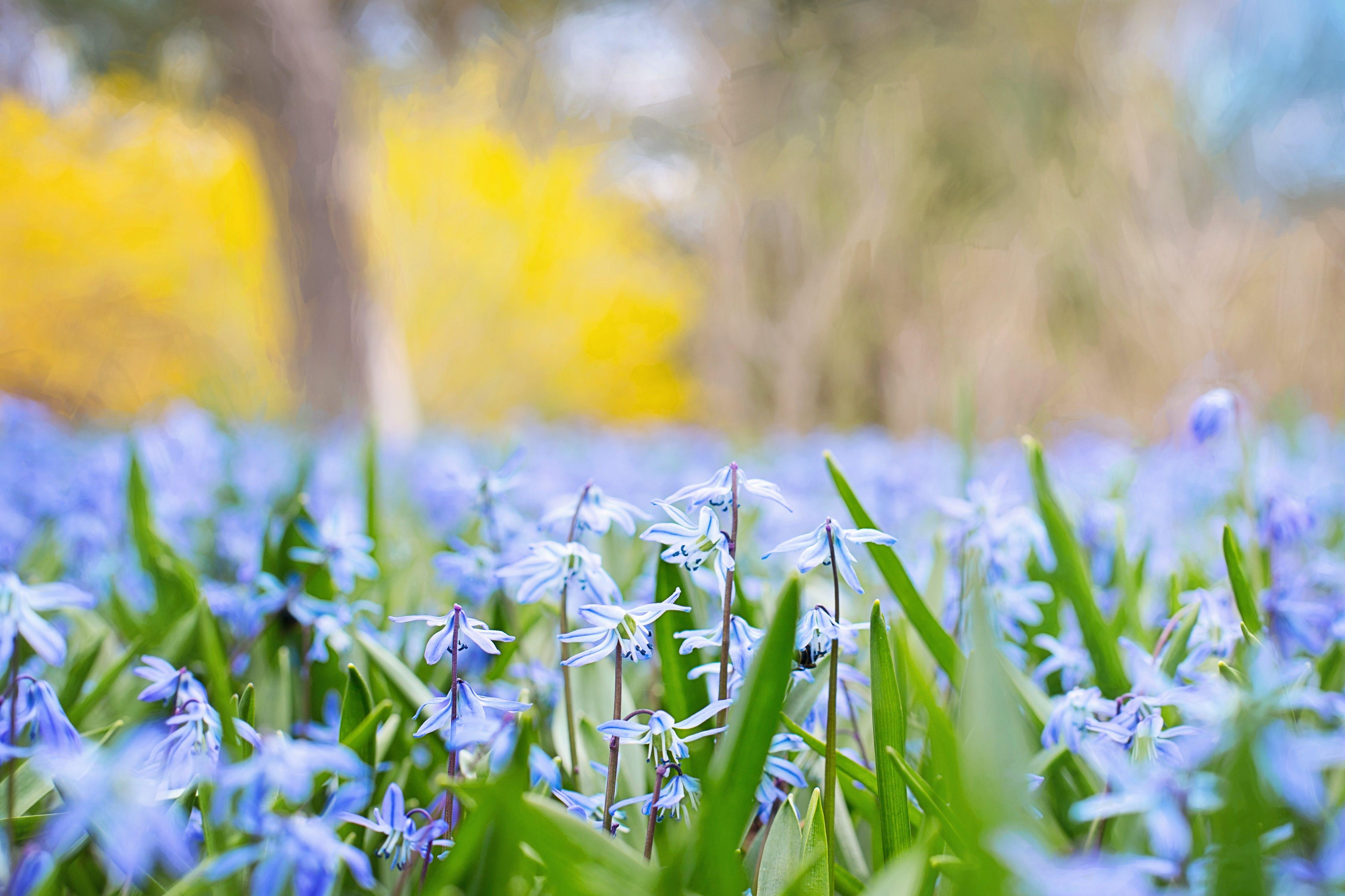 Selective Focus of Lavender Petal Flowers