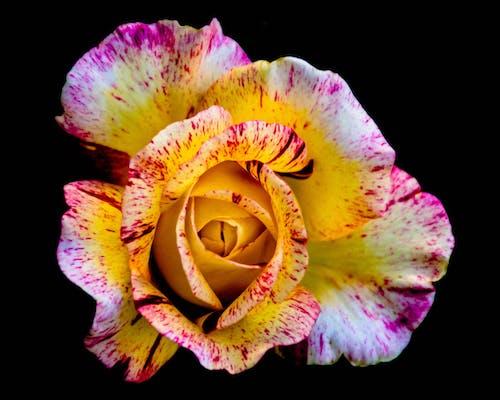 Ingyenes stockfotó anyatermészet, gyönyörű virágok, HD-háttérkép, ingyenes háttérkép témában