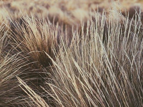 건조한, 들판, 섬세한, 식물군의 무료 스톡 사진